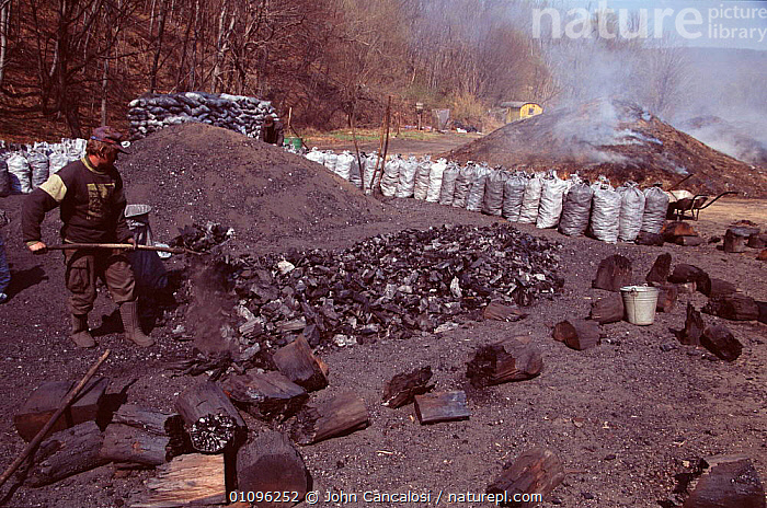 Charcoal making in Hungary, CHARCOAL,COMMERCIAL,ENERGY,FUEL,HORIZONTAL,JCA,PEOPLE,PLANTS,TREES,WOOD,Europe, John Cancalosi