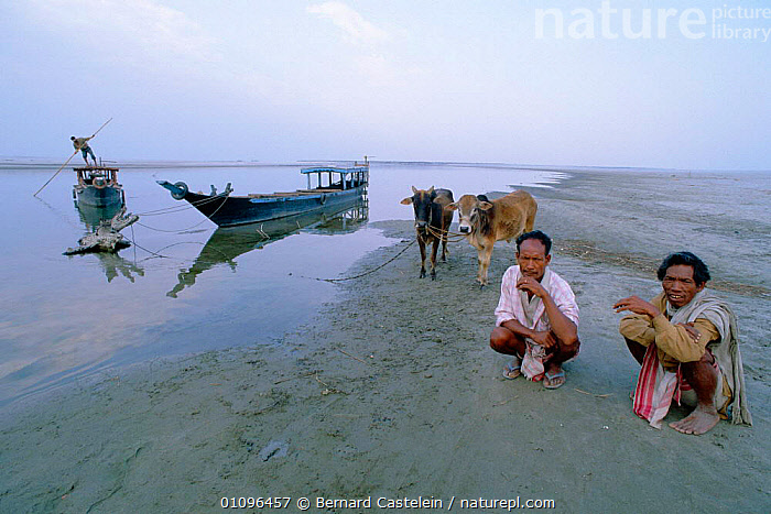 People waiting for ferry on banks of Brahmaputra river Majuli island, Assam, India, ASIA,BOATS,CATTLE,COWS,FERRY,HORIZONTAL,INDIAN SUBCONTINENT,ISLAND,LANDSCAPES,LIVESTOCK,MEN,PEOPLE,RIVER,RIVERS,WAITING,INDIA,INDIAN-SUBCONTINENT, Bernard Castelein