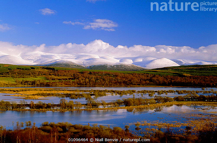 Insh marshes, nr Kingussie, Strathspey,  Scotland, UK, BENVIE,BRITISH,CAIRNGORMS,EUROPE,HORIZONTAL,LANDSCAPES,MARSHES,MOORLAND,MOUNTAINS,NB,NR,SNOW,UK,UNITED KINGDOM,WETLANDS,SCOTLAND, Niall Benvie
