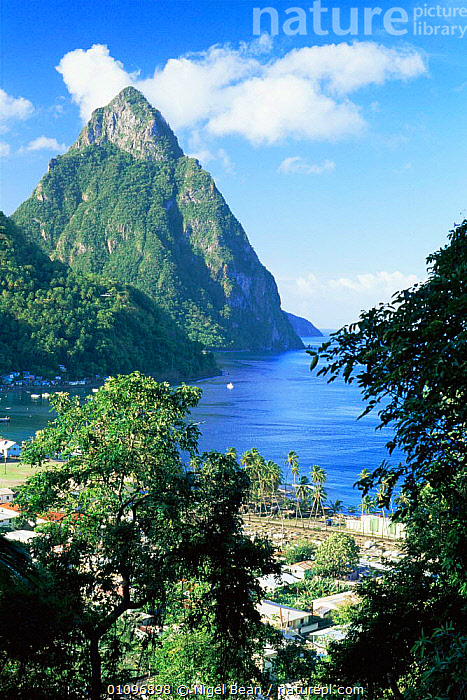 Petit Piton viewed from above Soufriere, St Lucia, West Indies, Caribbean, BUILDINGS,CARIBBEAN,CENTRAL AMERICA,COASTAL WATERS,COASTS,LANDSCAPES,MARINE,MOUNTAINS,TROPICAL,VERTICAL,WEST INDIES, Nigel Bean