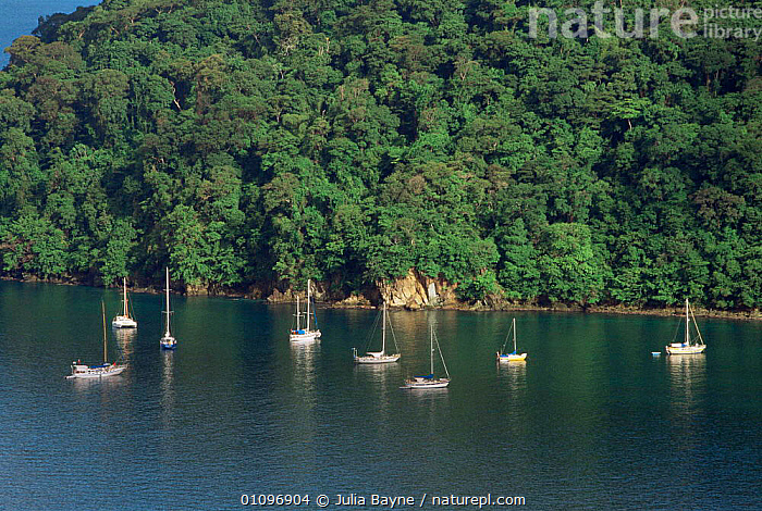 Aerial view of Boats moored near shoreline at Charlotteville, Tobago, West Indies, Caribbean, AERIALS,BOATS,CARIBBEAN,COASTAL WATERS,COASTS,FORESTS,MARINE,SEA,TREES,TROPICAL,WEST INDIES,Plants, Julia Bayne
