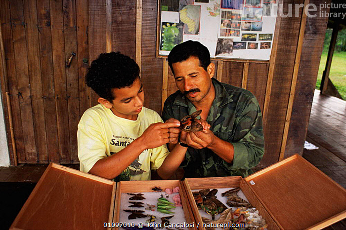 National Park employee Paratoxonomists showing insect to trainee, tropical rainforest, Costa Rica, BUILDINGS,CENTRAL AMERICA,CONSERVATION,EDUCATION,ENVIRONMENTAL,INFORMATION,INSECTS,INVERTEBRATES,MALES,NP,PEOPLE,RESEARCH,SCIENTISTS,STUDY,TROPICAL,TROPICAL RAINFOREST,WARDENS,National Park, John Cancalosi