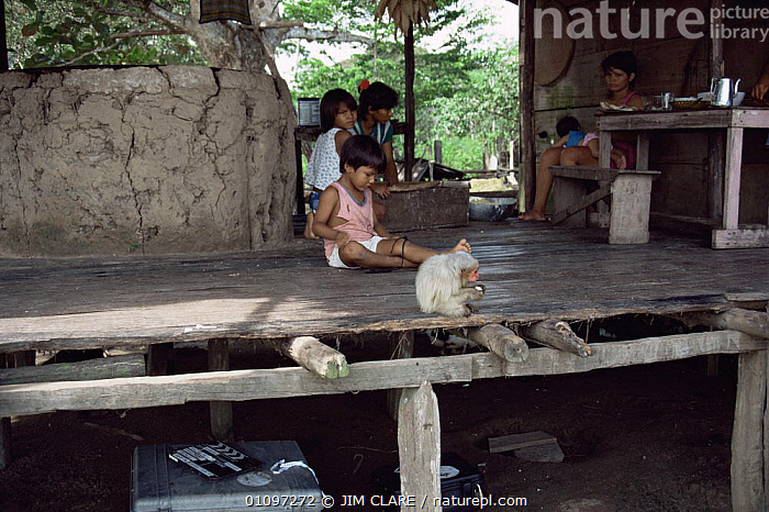 Caboclo people with pet Uakari monkey {Cacajao calvus} Brazil, South America, BUILDINGS,CHILDREN,CULTURES,FAMILIES,HOMES,HORIZONTAL,MAMMALS,PEOPLE,PETS,SOUTH AMERICA,TRADITIONAL,TRIBES,WETLANDS,SOUTH-AMERICA, JIM CLARE