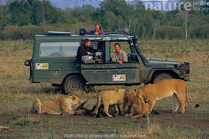 Jonathan Scott, presenter, with camerman watches lion pride feeding from landrover, Masai Mara NR, Kenya. BIG CAT DIARY 2000, AFRICA,ASC,CARNIVORES,CATS,DIARY,EAST AFRICA,FEEDING,FILMING,IN,WILD,GROUPS,HORIZONTAL,JEEP,LION,LIONS,MAMMALS,NR,OUTSIDE BROADCAST,PRESENTER,PREY,PRIDE,RESERVE,VEHICLE,VEHICLES, Angela Scott
