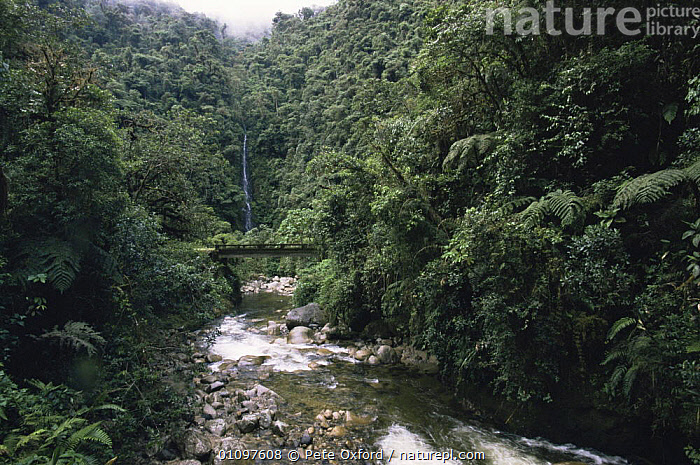 Stream running through Manu Cloud Forest, 1500m, Peru, South America, CLOUD FOREST,HABITAT,HORIZONTAL,LANDSCAPES,LEAVES,RIVERS,RUNNING,SOUTH AMERICA,TREES,TROPICAL,TROPICAL RAINFOREST,Plants,SOUTH-AMERICA, Pete Oxford