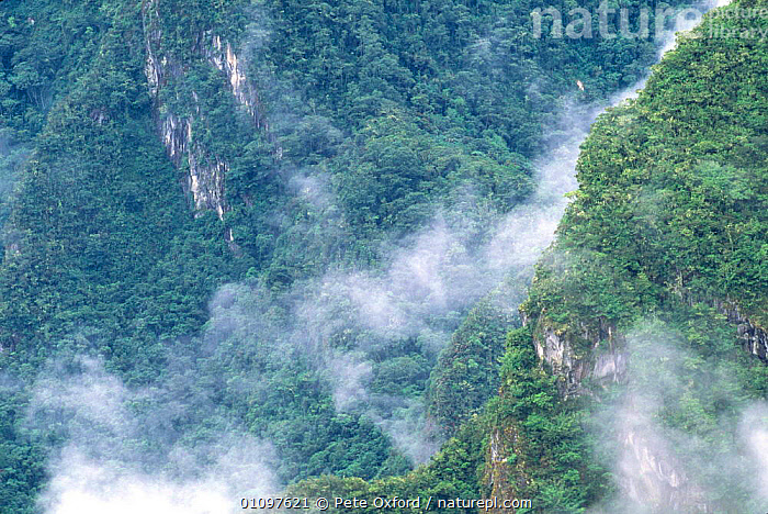 Looking down on cloud and tropical rainforest clad hills, surrounding Machu Picchu, Peru, South America, CLOUDS,FORESTS,HABITAT,HIGHLANDS,LANDSCAPES,MOUNTAINS,SOUTH AMERICA,TREES,TROPICAL,TROPICAL RAINFOREST,Weather,Plants,SOUTH-AMERICA, Pete Oxford