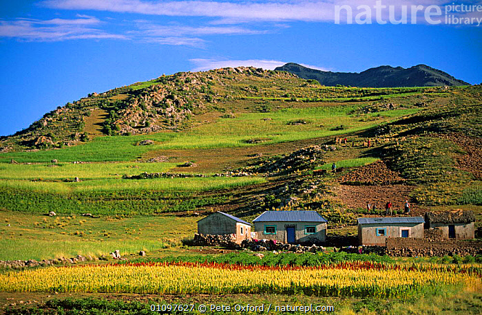 Local houses in highlands, Andes, Peru, South America, BUILDINGS,CROPS,CULTURES,HIGHLANDS,HOMES,HORIZONTAL,LANDSCAPES,MOUNTAINS,PEOPLE,SOUTH AMERICA,WORKING,SOUTH-AMERICA, Pete Oxford