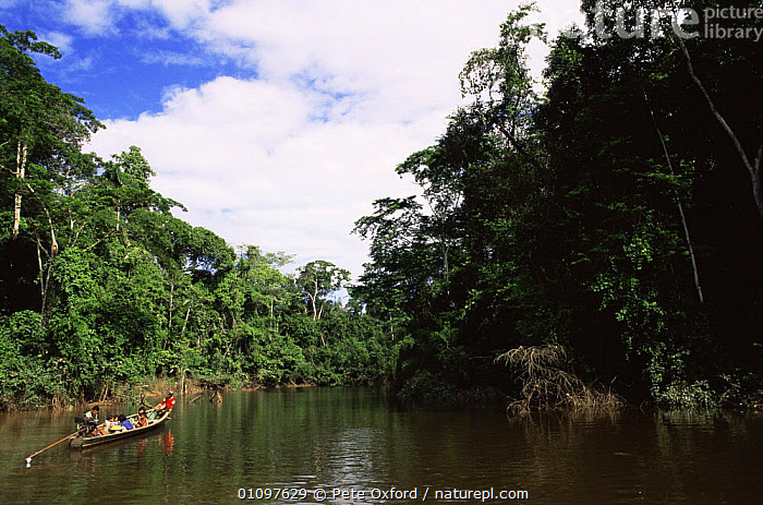 Local family travelling in canoe down Madre de Dios river, Peru, South America, BOATS,CANOES,CULTURES,FAMILIES,GROUPS,PEOPLE,RIVERS,SOUTH AMERICA,TRANSPORT,TRAVELLING,TREES,TRIBES,TROPICAL,TROPICAL RAINFOREST,WATER,Plants,SOUTH-AMERICA, Pete Oxford