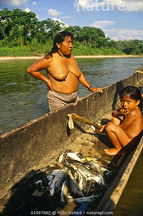 Huaorani indian with fish catch, Dayuno community, Nushino river, Ecuadorian Amazon, BOATS,CHILD,CHILDREN,CULTURES,FISH,HUNTING,HUNTING FOOD,PEOPLE,RIVERS,SOUTH AMERICA,TRADITIONAL,TRIBES,TROPICAL,TROPICS,WETLANDS,WOMAN,SOUTH-AMERICA, Pete Oxford
