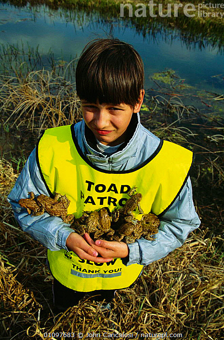 Child on Toad Patrol - helping toads across road to reach breeding lake, AMPHIBIANS,HUNGARY,CHILDREN,WETLANDS,GROUPS,RELEASED,CONSERVATION,GROUP,HELPS,EUROPE,PEOPLE,RESCUED, John Cancalosi