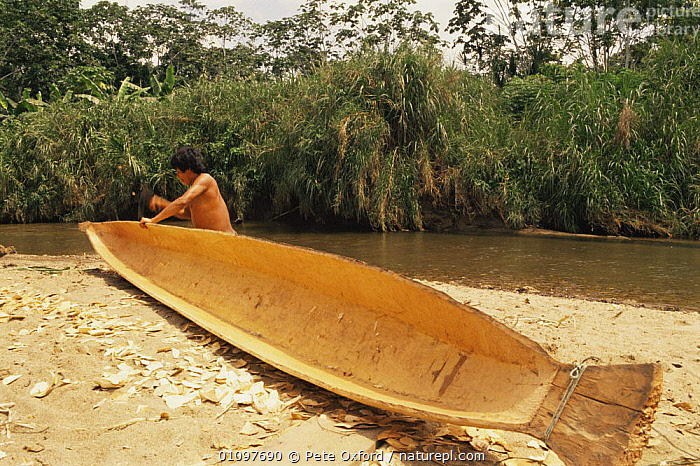 Indian man building a canoe, working with Adze, Ecuadorian Amazon, South America 1994, BOATS,CULTURES,HORIZONTAL,MAN,PEOPLE,RIVERS,SOUTH AMERICA,WORKING,SOUTH-AMERICA, Pete Oxford