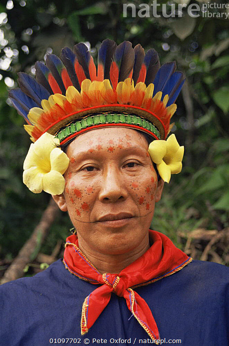 Cofan Indian head portrait, Rio Agua Rico Ecuadorian Amazon, wearing traditional clothing  and feather headress, COLOURFUL,CULTURES,FACES,FEATHERS,FLOWERS,HEADS,PEOPLE,PORTRAITS,SOUTH AMERICA,TRADITIONAL,TRIBES,VERTICAL, Pete Oxford