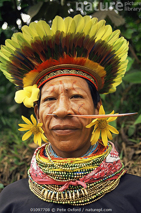 Cofan Indian portrait in traditional dress, Rio Agua Rico, Ecuadorian Amazon, South America, COLOURFUL,CULTURES,FACES,FEATHERS,HEADS,MALES,PEOPLE,PORTRAITS,SOUTH AMERICA,TRADITIONAL,TRIBES,VERTICAL, Pete Oxford