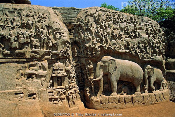 9th century rock carving Mahabalipuram, Tamil Nadu, India, LANDSCAPES,STATUES,INDIAN SUBCONTINENT,RELIGIOUS,STATUE,ELEPHANTS,PEOPLE,ELEPHANT,ANCIENT,ASIA,ART,CULTURE,INDIAN-SUBCONTINENT, Toby Sinclair