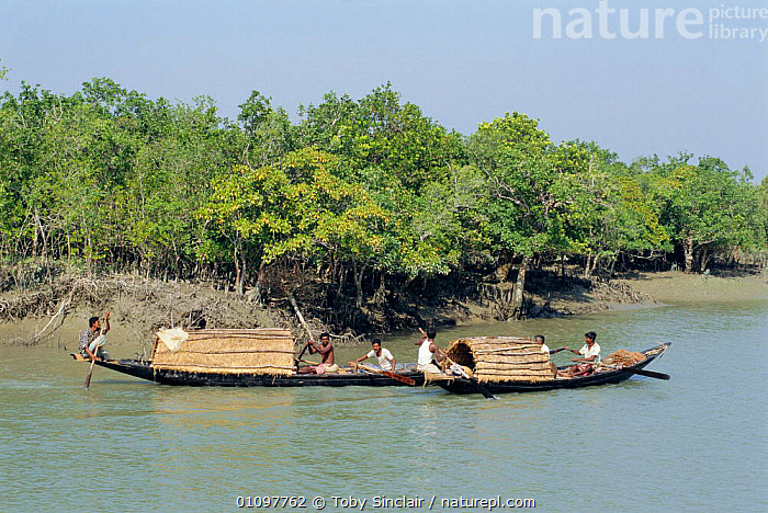 Local fishermen on boats Sunderbans tiger reserve, West Bengal, India, FISHING,BOATS,INDIAN SUBCONTINENT,ASIA,RIVER,LANDSCAPES,WETLANDS,RIVERS,LANDSCAPE,TWO,SCENICS,TRADITIONAL,SCENIC,INDIAN-SUBCONTINENT,INDIA, Toby Sinclair