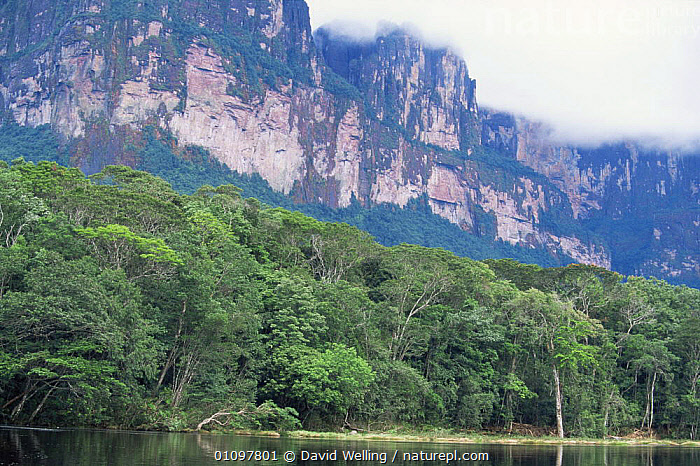 Anyan Tepui from Carrao river, Canaima National Park, Venezuela, CLOUDS,HIGHLANDS,HORIZONTAL,LANDSCAPES,NP,RESERVE,ROCK FORMATIONS,ROCKS,SOUTH AMERICA,TREES,TROPICAL,TROPICAL RAINFOREST,Weather,Geology,Plants,National Park,SOUTH-AMERICA, David Welling