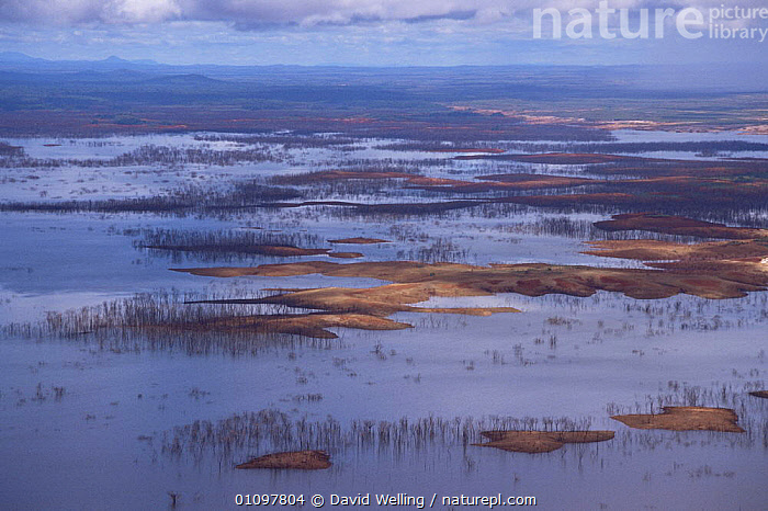 Aerial view of floodplain near Canaima National Park, Venezuela, AERIALS,HORIZONTAL,LANDSCAPES,NP,RESERVE,SOUTH AMERICA,WATER,WETLANDS,National Park,SOUTH-AMERICA, David Welling