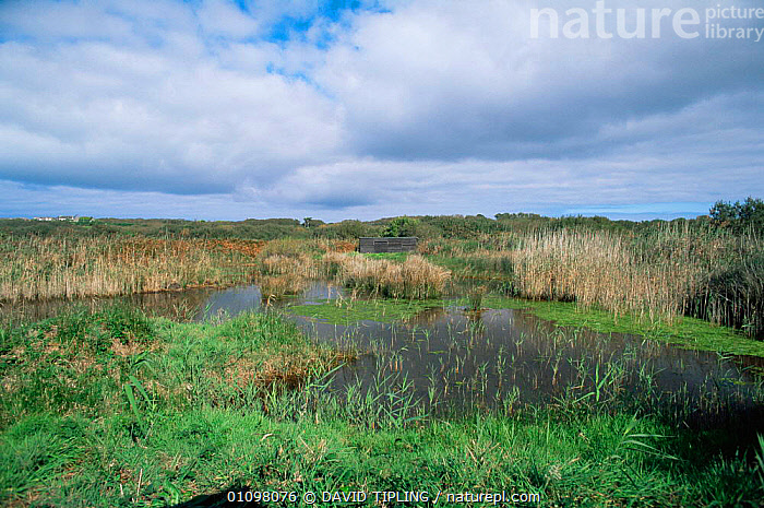 Lower Moors NR with hide, St Mary's, Scilly Isles, Cornwall, UK, BUILDINGS,CORNWALL,ENGLAND,EUROPE,LANDSCAPES,RESERVE,UK,WETLANDS,United Kingdom,British, DAVID TIPLING
