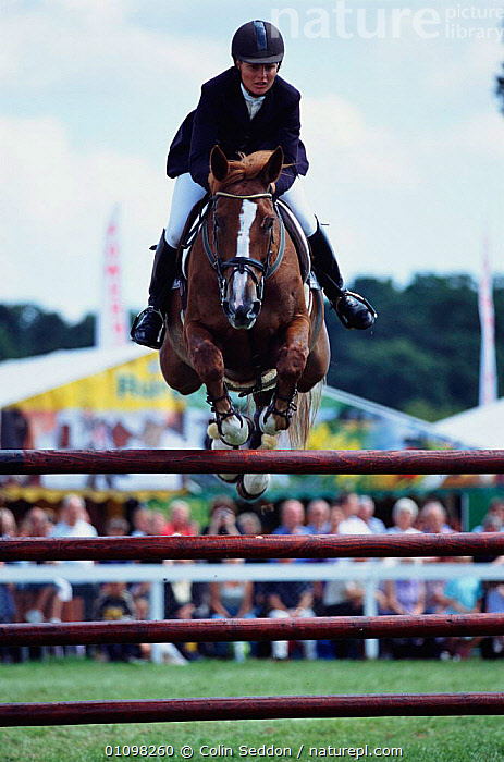 Horse and rider show jumping in competition at New-Forest Show, Hampshire, UK 2002  ,  ACTION,COMPETITION,CS,ENGLAND,EUROPE,FENCE,HAMPSHIRE,HORSE,JUMPING,MAMMAL,MAMMALS,PEOPLE,PERISSODACTYLA,PET,PETS,RIDER,UK,VERTICAL,UNITED KINGDOM,BRITISH,EQUINES  ,  Colin Seddon