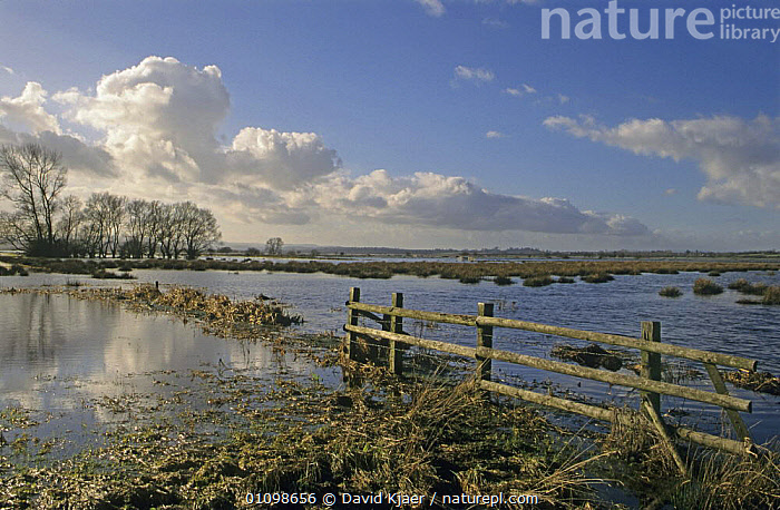 Winter flooding on Somerset levels, West Sedgemoor, Somerset, UK  ,  ENGLAND,EUROPE,FARMLAND,LANDSCAPES,UK,WINTER,United Kingdom,British  ,  David Kjaer