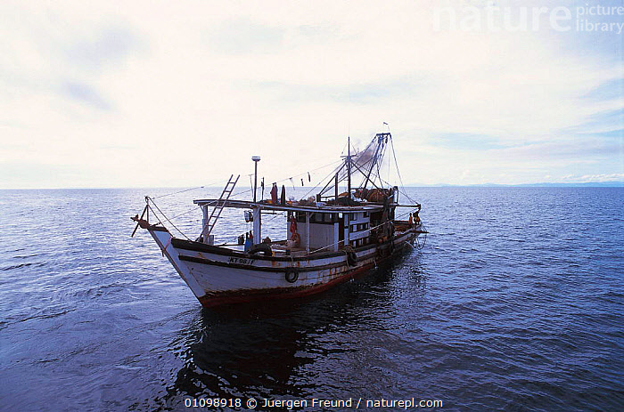 Trawler boat Sulu-sulawesi seas, Indo-pacific  ,  ASIA,BOAT,BOATS,HORIZONTAL,INDIAN,INDO,INDO PACIFIC,JFR,MARINE,OCEAN,PACIFIC,SEAS,SOUTH EAST ASIA,SULU,SULU SULAWESI,TRAWLER  ,  Jurgen Freund