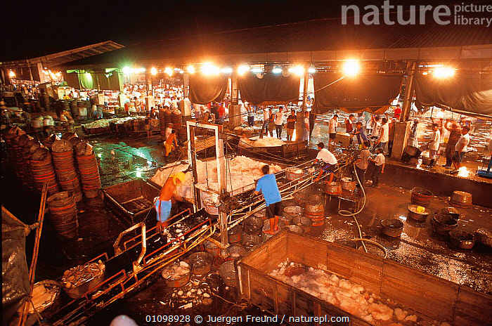 Fish arriving at market, Navotas, Manila, Philippines.  ,  ASIA,BUSY,FISH,FISHERMEN,FREUND,HORIZONTAL,INDIAN,INDO,INDO PACIFIC,JFR,MARINE,MARKET,NIGHT,PACIFIC,PEOPLE,PHILIPPINES,SOUTH EAST ASIA,SULU SULAWESI,TRADE,TRAWLER,SOUTH-EAST-ASIA  ,  Jurgen Freund