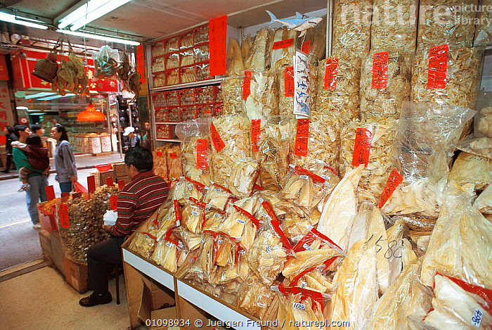 Shark fins for sale in market. Hong Kong, China  ,  ASIA,FINS,FISH,FOOD,HORIZONTAL,JFR,MARKET,PEOPLE,SEA,SHARK,SOUP,SOUTH EAST ASIA,SULU SULAWESI,TRADE  ,  Jurgen Freund