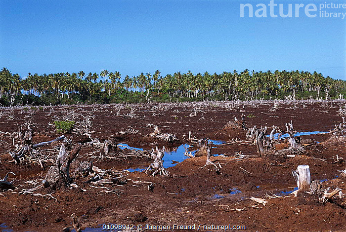 Mangrove deforestation to make way for fish ponds. Philippines.  ,  ASIA,DEFORESTATION,DESTRUCTION,DIGITAL,FARMER,FISHPONDS,HABITAT,HORIZONTAL,INDIAN,INDO PACIFIC,JFR,MANGROVES,MARINE,SOUTH EAST ASIA,SULU SULAWESI,SOUTH-EAST-ASIA  ,  Jurgen Freund