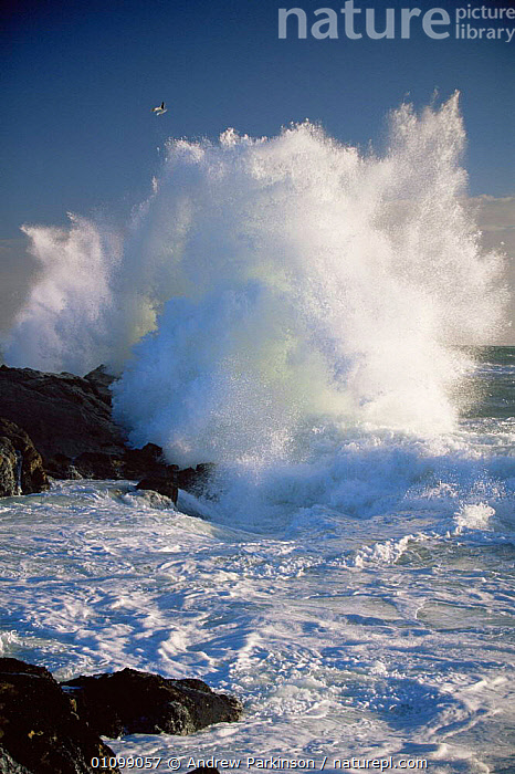 Wave breaking on coast of Bird Island, Lamberts Bay, South Africa  ,  SPRAY,SOUTHERN AFRICA,VERTICAL,WHITE,ENERGY,DRAMATIC,COASTS,POWER,POWERFUL,FOAM,LANDSCAPES,SURF,SEA,WAVES,Concepts,Catalogue1  ,  Andrew Parkinson