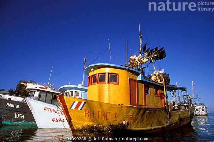 Longline fishing boats in harbour, Punta Arenas, Costa Rica Costa Rica, Pacific Ocean,  ,  BOAT,BOATS,FISH,HARBOUR,HORIZONTAL,ISLAND,JR,LINE,LONG,LONGLINE,MARINE,MOORED,PACIFIC,SEA,SHARK FISHING,SHARKS,SHIP,STORY,SPORTS  ,  Jeff Rotman