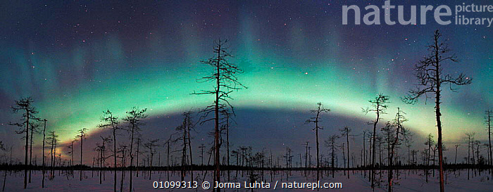 Aurora borealis bow prior to storm. Northern Finland, winter 2002  ,  AMAZING,ARCTIC,COLOURFUL,COLOURS,DEAD,EUROPE,FINLAND,HEMISPHERE,HORIZONTAL,JLU,LANDSCAPES,NATURAL,NIGHT,OUTSTANDING,PANORAMIC,PHENOMENON,SKY,STARS,TAIGA,TREES,WINTER,SCANDINAVIA,PLANTS  ,  Jorma Luhta