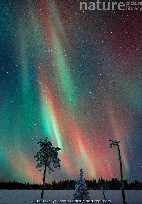 Aurora borealis colours in night sky, northern Finland, January, winter  ,  AMAZING,ARCTIC,COLOURFUL,COLOURS,EUROPE,FINLAND,HEMISPHERE,HORIZONTAL,JLU,JORMA,LANDSCAPES,MAGIC,MAGICAL,NATURAL,NIGHT,PHENOMENON,PLANTS,SCANDINAVIA,SKY,SNOW,STARS,TAIGA,TREES,VERICQL,VERTICAL,WINTER, Europe, Europe, Europe, Europe, Europe  ,  Jorma Luhta