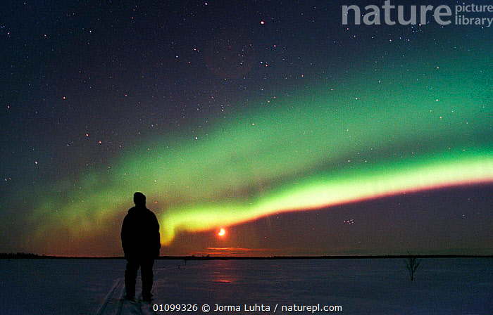 Person watching Aurora borealis colours in night sky, northern Finland, winter, AMAZING,ARCTIC,COLOURFUL,COLOURS,EUROPE,FINLAND,HEMISPHERE,HORIZONTAL,JLU,LANDSCAPES,MAGIC,MAGICAL,NATURAL,NIGHT,ONE,OUTSTANDING,PEOPLE,PHENOMENON,PLANTS,SCANDINAVIA,SKIES,SKY,STARS,THE MOON,TREES,WINTER, Europe, Europe, Europe, Europe,Wonder,Spectacular,,,Divine,, Jorma Luhta