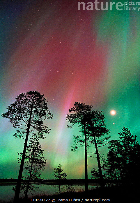 Aurora borealis colours in night sky with moon, northern Finland, Autumn  ,  AMAZING,ARCTIC,AUTUMN,COLOURFUL,COLOURS,EUROPE,FINLAND,HEMISPHERE,HORIZONTAL,JLU,LANDSCAPES,MAGIC,MAGICAL,MOON,NATURAL,NIGHT,PHENOMENON,PLANTS,SCANDINAVIA,SILHOUETTES,SKIES,SKY,STARS,TAIGA,TREES,VERTICAL,WETLANDS, Europe, Europe, Europe, Europe, Europe  ,  Jorma Luhta