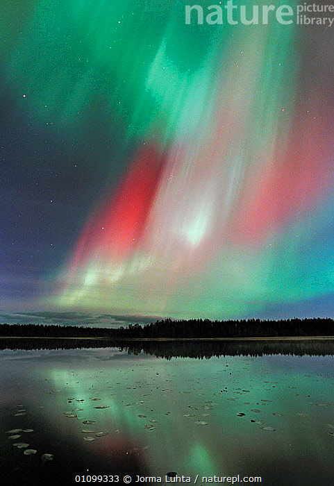 Aurora borealis colours in night sky over lake, northern Finland  ,  AMAZING,ARCTIC,COLOURFUL,COLOURS,EUROPE,FINLAND,HEMISPHERE,JLU,LAKES/RIVERS,LANDSCAPES,MAGIC,MAGICAL,NATURAL,NIGHT,OUTSTANDING,PHENOMENON,PLANTS,SCANDINAVIA,SKY,STARS,TREES,VERTICAL,WATER,WINTER, Europe, Europe  ,  Jorma Luhta