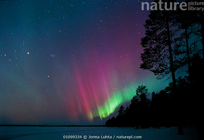 Aurora borealis colours in night sky, northern Finland, winter  ,  AMAZING,ARCTIC,COLOURFUL,COLOURS,EUROPE,FINLAND,HEMISPHERE,HORIZONTAL,JLU,LANDSCAPES,MAGIC,MAGICAL,NATURAL,NIGHT,OUTSTANDING,PHENOMENON,SILHOUETTES,SKY,STARS,TREES,WINTER,SCANDINAVIA,PLANTS  ,  Jorma Luhta