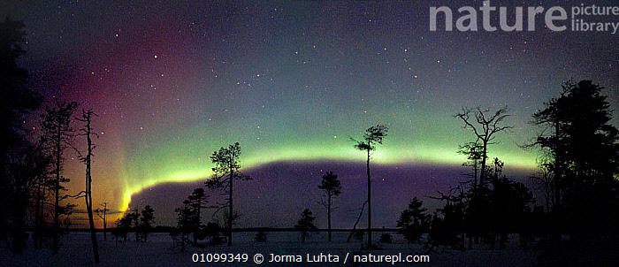 Moving belt of aurora borealis colours in night sky. Lapland, northern Finland, winter  ,  AMAZING,ARCTIC,COLOURFUL,COLOURS,CONIFEROUS,EUROPE,FINLAND,HEMISPHERE,HORIZONTAL,JLU,LANDSCAPES,MAGIC,MAGICAL,NATURAL,NIGHT,OUTSTANDING,PANORAMIC,PHENOMENON,PLANTS,SILHOUETTES,SKIES,SKY,SNOW,STARS,TREES,WINTER,SCANDINAVIA  ,  Jorma Luhta