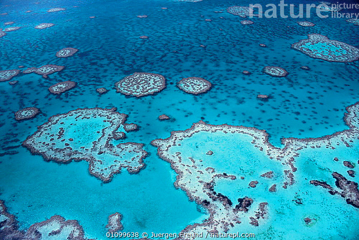 Aerial view of Great Barrier Reef, Queensland, Australia  ,  ABSTRACT,AERIAL,ARTY,ARTY SHOTS,BLUE,CORAL,CORAL REEFS,CORALS,ECOSYSTEM,HABITAT,HORIZONTAL,JFR,LANDSCAPES,MARINE,OCEAN,PACIFIC,REEF,REEFS,SCENIC,SEA,SEASCAPE,SHALLOW,TROPICAL ,AERIALS,AUSTRALIA,Catalogue1  ,  Jurgen Freund