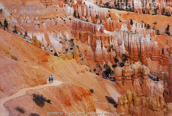 Tourists hiking down path viewing Hoodoos, Bryce Canyon NP, Utah, USA. Sandstone erosion  ,  BRYCE,CANYON,DESERT,DESERTS,EROSION,FORMATIONS,GD,GEOLOGY,HIKERS,HIKING,HORIZONTAL,LANDSCAPE,LANDSCAPES,NATIONAL PARK,NORTH AMERICA,NP,PATH,PATHS,PEOPLE,RESERVE,ROCK,ROCK FORMATIONS,ROCKS,SANDSTONE,SCENIC,SCENICS,TRAVEL,WALKING,USA  ,  Georgette Douwma