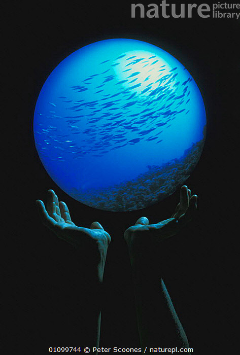 The world in our hands - fisheye view of school of school of fish  ,  FISH,GLOBE,HANDS,MARINE,OCEAN,OCEANS,PEOPLE,PS,SMALL,SYMBOLIC,UNDERWATER,VERTICAL,VULNERABLE,WORLD  ,  Peter Scoones