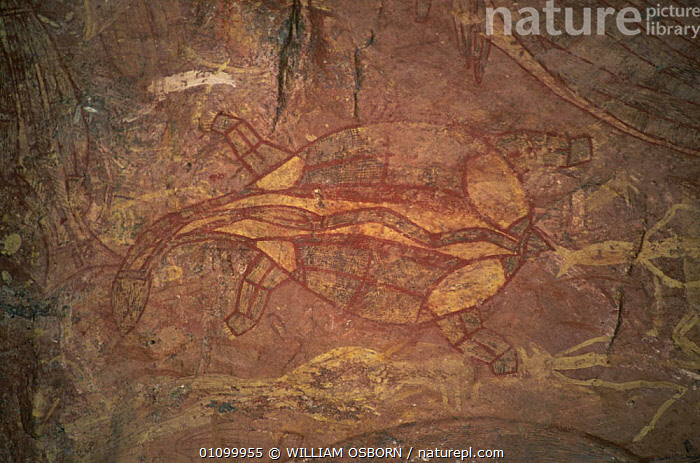 Aboriginal rock art, x-ray style long-necked turtle, Ubirr, Kakadu NP, Northern Territory, Australia  ,  ANCIENT,ART,AUSTRALASIA,AUSTRALIA,CAVE PAINTING,CAVES,CULTURES,NP,OLD,PAINTING,RESERVE,ROCK PAINTING,TRIBAL,TRIBES,National Park  ,  WILLIAM OSBORN