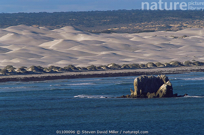 Scenic view of sand dunes from the Head of the Bight, Yalata, The Nullabor, South Australia  ,  AERIALS,AUSTRALASIA,AUSTRALIA,COASTAL WATERS,COASTS,LANDSCAPES,MARINE,SAND DUNES,SEA,SOUTHERN,Deserts  ,  Steven David Miller