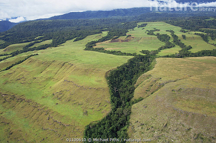 Aerial view of uplifted coral terraces, Huon Peninsula, Papua New Guinea  ,  AERIALS,ASIA,COASTS,CORAL REEFS,CORALS,LANDSCAPES,PAPUA NEW GUINEA,ROCK FORMATIONS,SOUTH EAST ASIA,TREES,TROPICAL,TROPICS,Marine,Geology,Plants,  ,  Michael Pitts