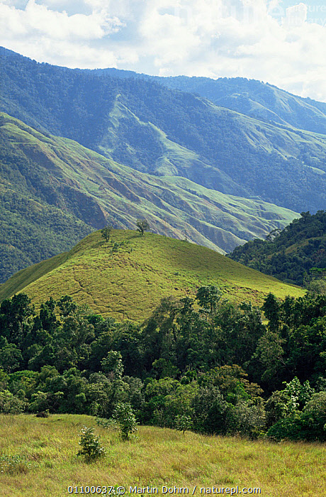 Schrader Ranges landscape in the highlands of Papua New Guinea  ,  ASIA,GREEN,HABITAT,HIGHLANDS,LANDSCAPES,PAPUA NEW GUINEA,PLANTS,SOUTH EAST ASIA,TREES,VERTICAL,WEST-AFRICA  ,  Martin Dohrn