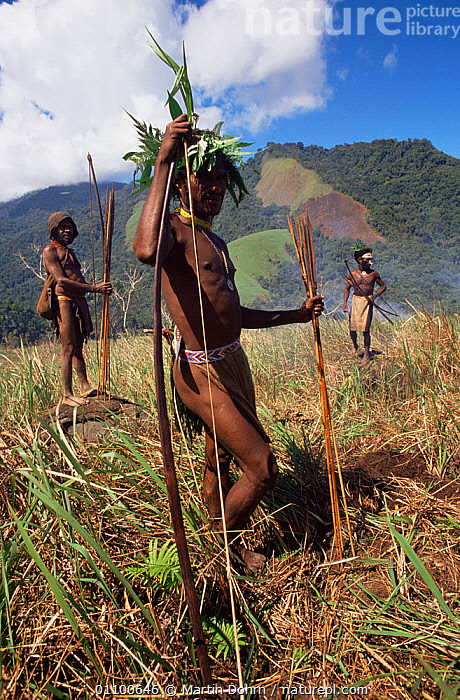 Hagehai warriors hunting pigs, smoking them out of field, Papua New Guinea  ,  ASIA,CULTURES,FIRE,GROUPS,HIGHLANDS,HUNTING,HUNTING FOOD,MALES,MAMMALS,PAPUA NEW GUINEA,PIGS,SOUTH EAST ASIA,TRADITIONAL,TRIBES,VERTICAL,WEST-AFRICA  ,  Martin Dohrn