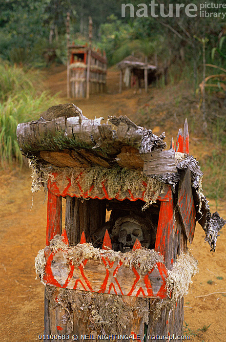 Traditional Huli wigman grave, Papua New Guinea, 1991  ,  ASIA,BODY,CARCASS,CULTURES,GRAVES,PAPUA NEW GUINEA,PEOPLE,SKELETON,SOUTH EAST ASIA,TRADITIONAL,TRIBAL,TRIBES,VERTICAL,WEST-AFRICA  ,  NEIL NIGHTINGALE