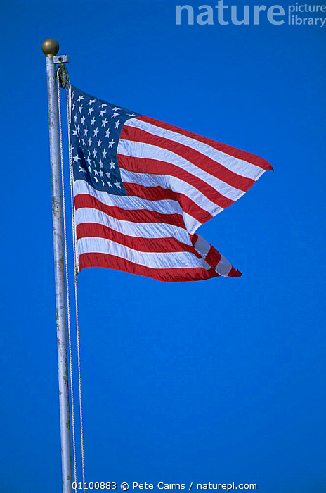 Stars and Stripes USA national flag blowing in wind against blue sky  ,  AMERICA,FLAGS,LANDSCAPES,NORTH,VERTICAL,North America  ,  Pete Cairns