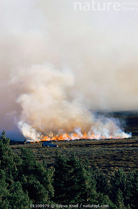 Controlled burning of heather moorland, Peak District NP, Derbyshire UK  ,  ENGLAND,EUROPE,FIRE,HABITAT,LANDSCAPES,MOORLAND,RESERVE,SMOKE,UK,VERTICAL,United Kingdom,British  ,  Steve Knell