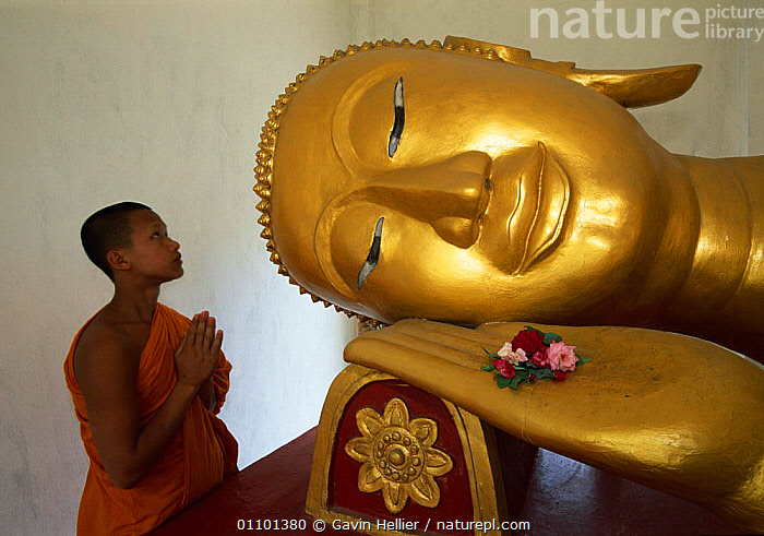 Reclining Buddha and Novice Monk at Wat Pha Baat Tai, Luang Prabang, Laos, South East Asia. Model released.  ,  ASIA,BUDDHA,BUDDHISM,BUDDHIST,CONCENTRATION,CULTURE,CULTURES,DECORATED,FACES,FLOWERS,GHE,HORIZONTAL,MEDITATING,OLD,ORNATE,PEOPLE,PHA,PORTRAITS,PRAYING,QUIET,RECLINING,REFLECTION,RELIGION,RELIGIOUS,SOUTH EAST ASIA,STATUE,STATUES,TEMPLE,TEMPLES,TRAVEL,SOUTH-EAST-ASIA  ,  Gavin Hellier