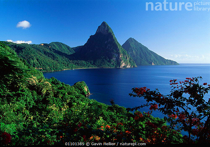 Soufriere Bay landscape with volcanic peaks of the Pitons, St Lucia, Caribbean  ,  CARIBBEAN,COAST,COASTAL WATERS,COASTS,CONCEPTS,GHE,HOLIDAYS,HORIZONTAL,INDIES,ISLAND,ISLANDS,LANDSCAPE,LANDSCAPES,LUSH,PEAKS,PITONS,PLANTS,SCENICS,SEA,TRAVEL,TREES,TROPICAL,VOLCANIC,WEST INDIES  ,  Gavin Hellier